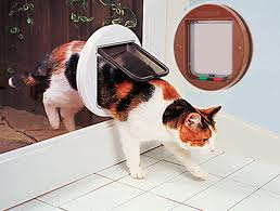 cat flaps london